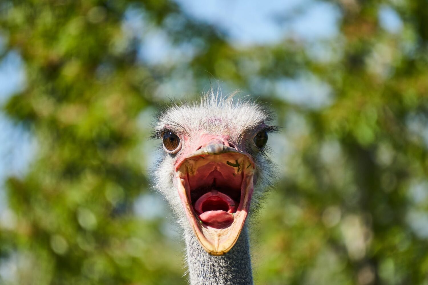 The Ostrich Head Syndrome